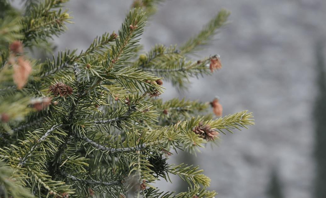 weihnachtsbaumversand